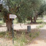 akropoli arxaias Spartis (10)